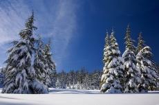 snih-les-zima
