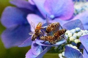 nedostatek pastvy pro včely