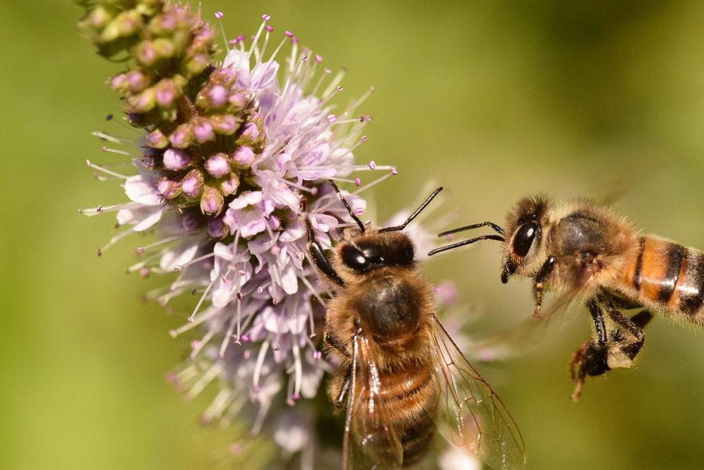 jak pomoci včelám