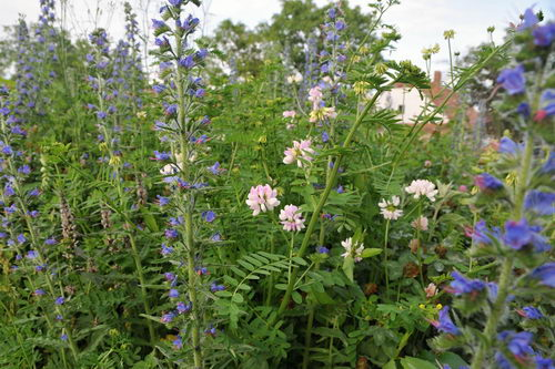 Trvalky pro včely, kvetoucí louka