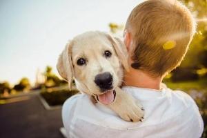 pes, proti stresu