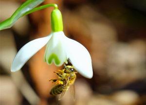včely v únoru
