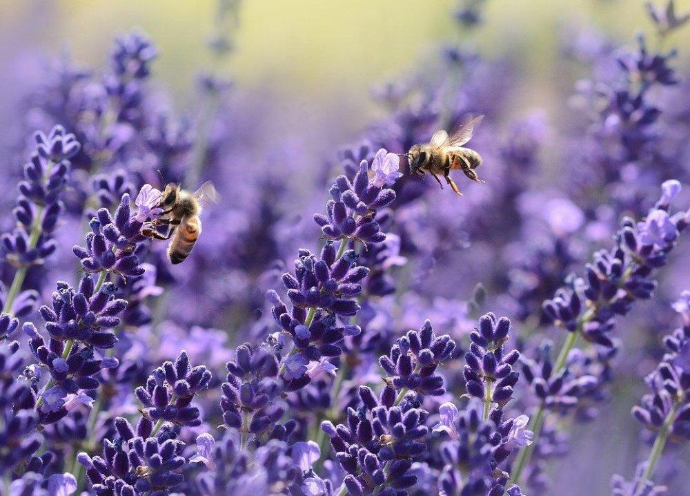 včely v červenci