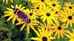 třapatka, rostliny pro hmyz