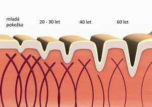 funkce kolagenu v pokožce, úbytek kolagenu