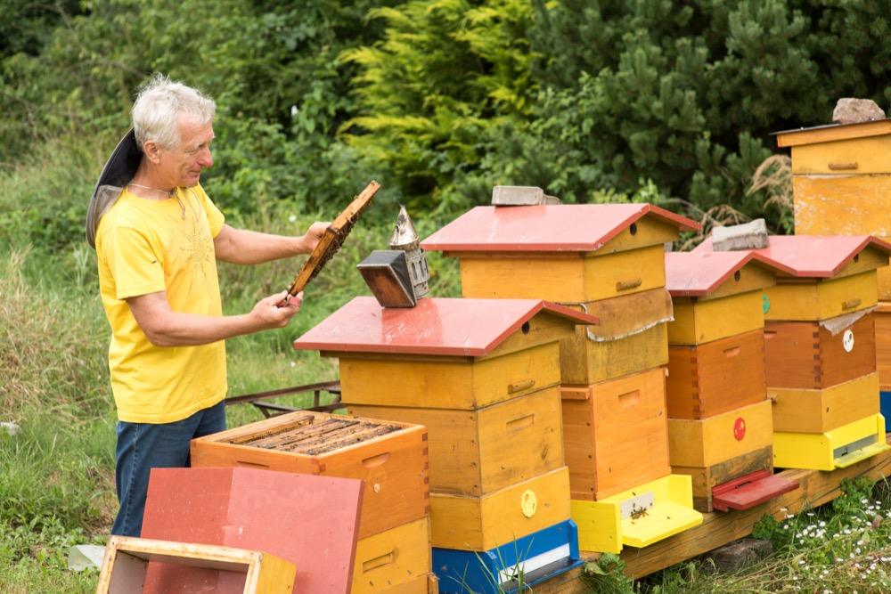 jak vypadá včelí úl