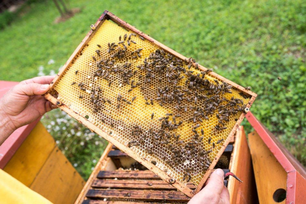 Kniha Rok včelaře, Milan Pleva