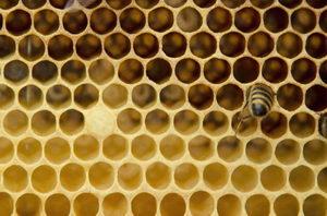 Včelí vosk, plástve z vosku