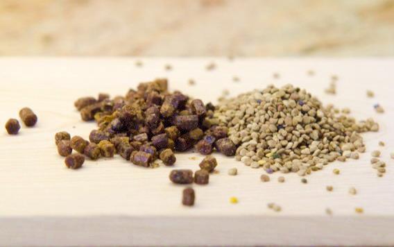 včelí pyl rouskovaný, včelí pyl perga - včelí chléb
