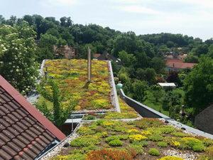 extenzivní zelená střecha, greenville