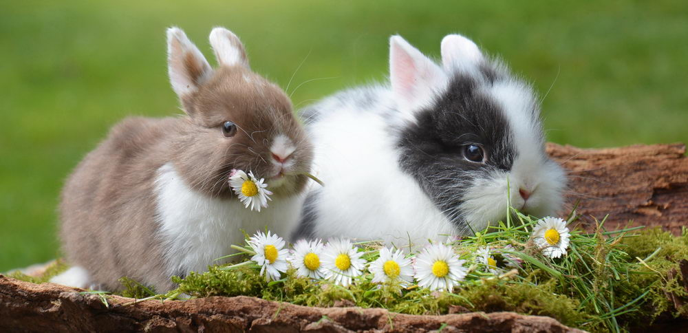 naše kosmetika není testována na zvířatech