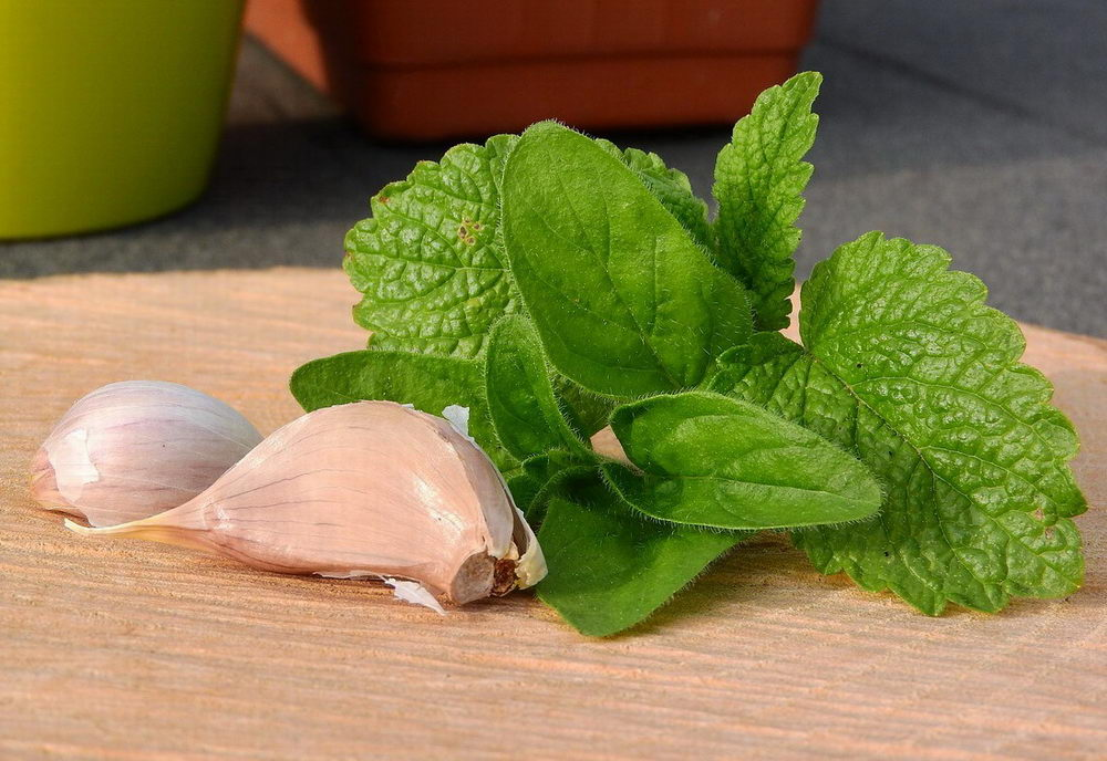 opar, léčba, přírodní, domácí, česnek, bylinky