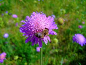 Rozkvetlá zahrada pro včely, motýly a jiný hmyz
