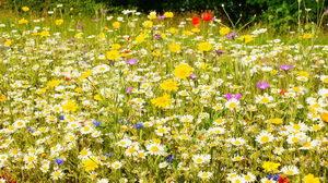 Přírodní kvetoucí zahrada