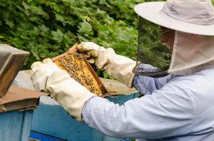 kontrola zásob včelstva