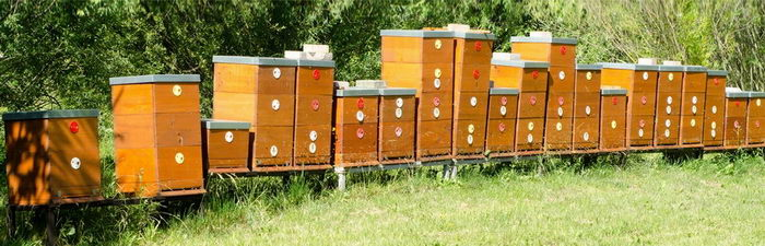 včelí úly, včelařské omyly