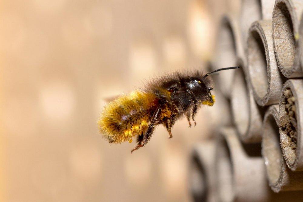 užitečný hmyz na zahradě, včela samotářka, domeček pro včely samotářky