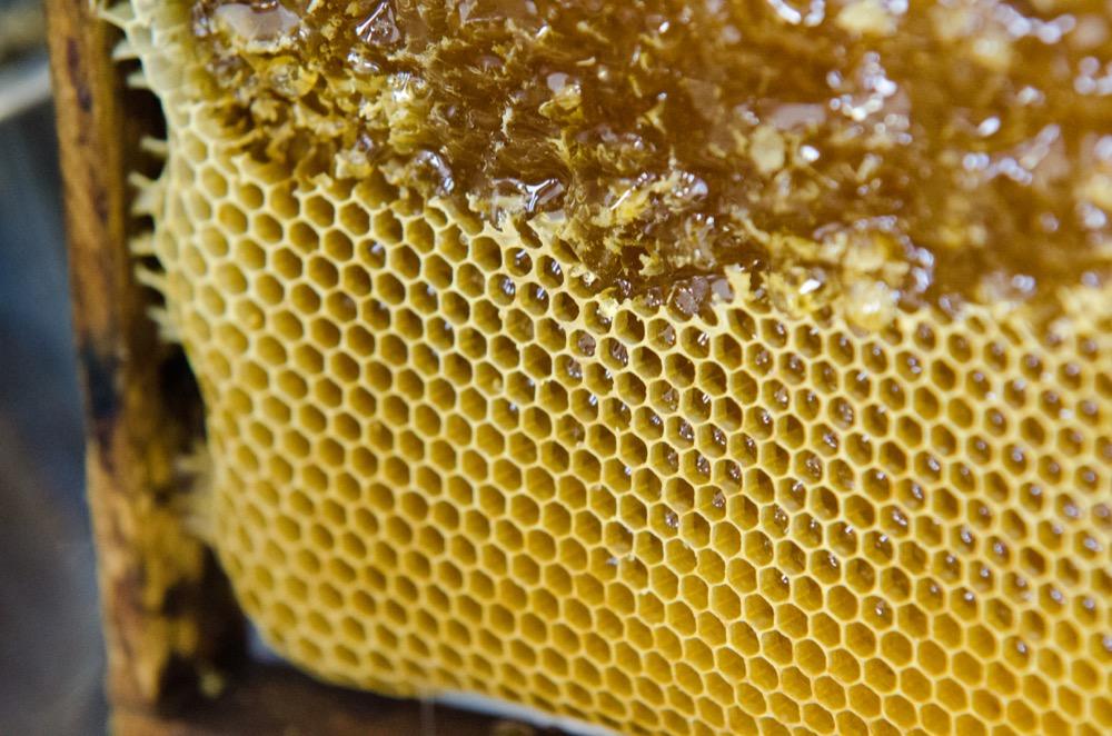 Medové mýdlo (žluté) - Pleva