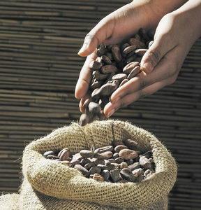 Kakaové boby, pleva