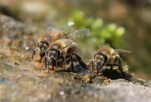 pitko pro hmyz