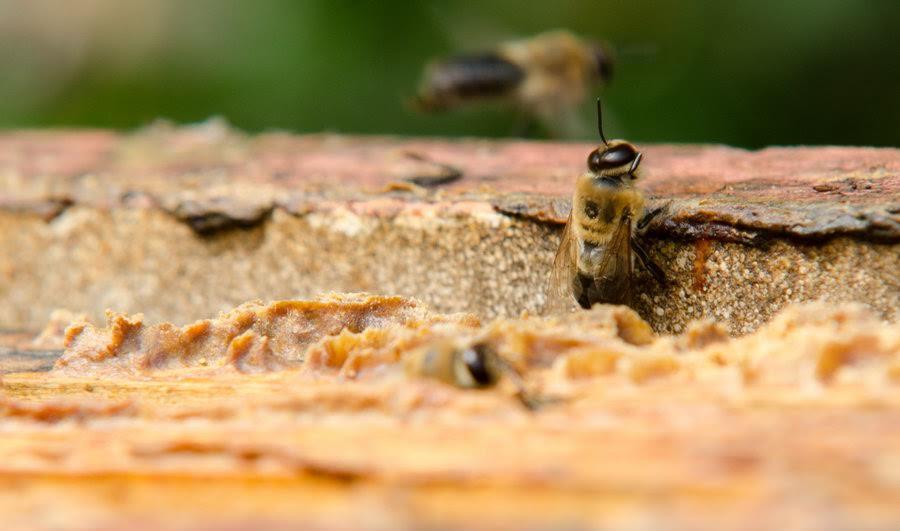 Včely s propolisem