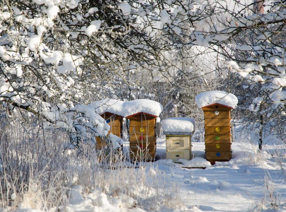 včely v lednu