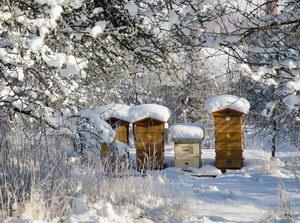včelí úly v zimě