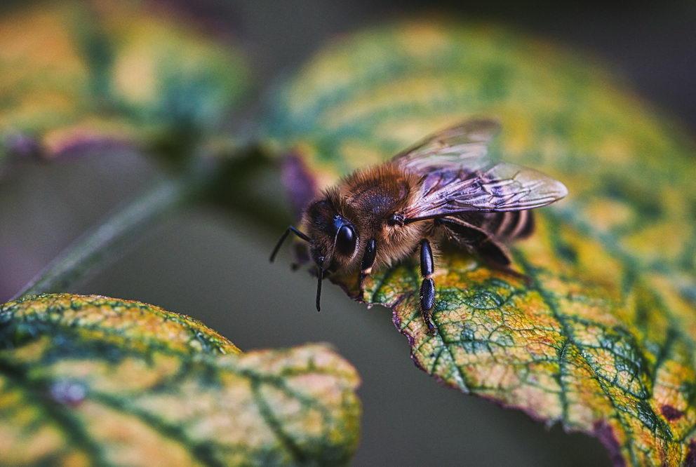 včely v říjnu