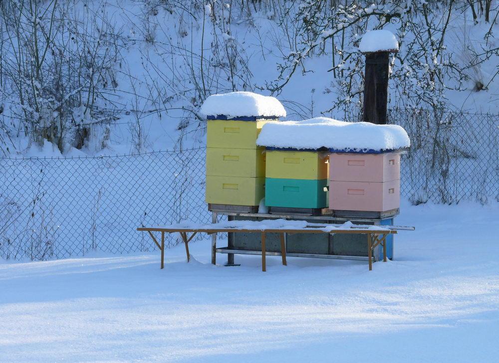 úly v zimě, přezimování včel, kalendář včelaře