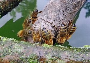 napáječky pro včely a hmyz