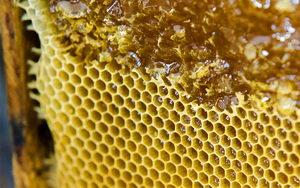 včely v květnu