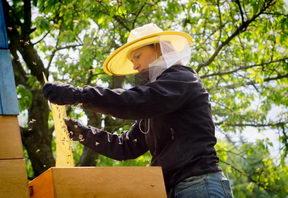 práce včelaře v květnu