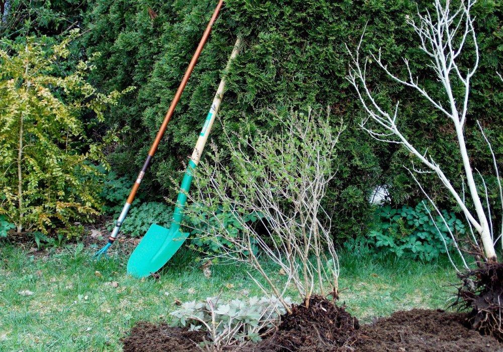 když se rostlinám na zahradě nedaří