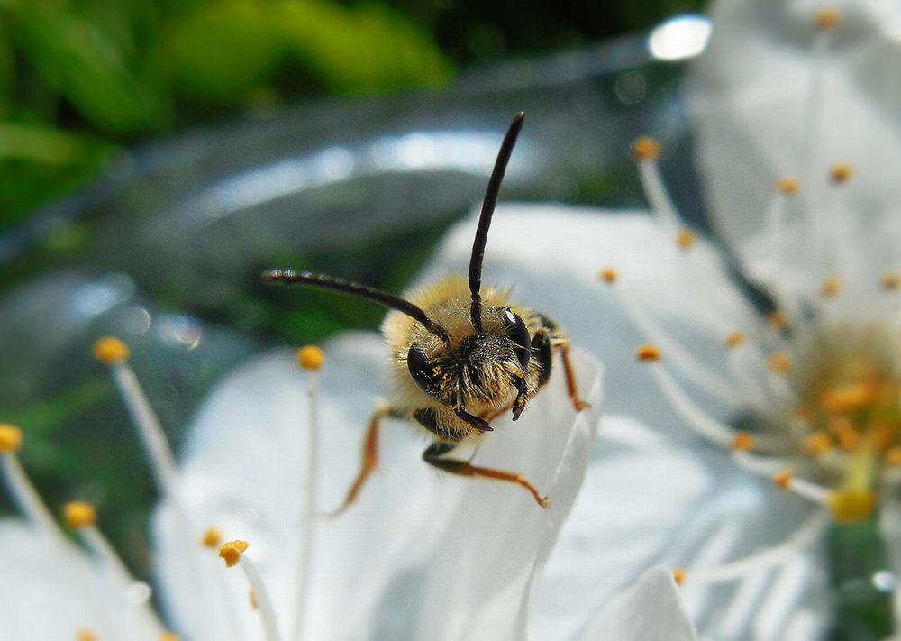 letící včela, léčení včel