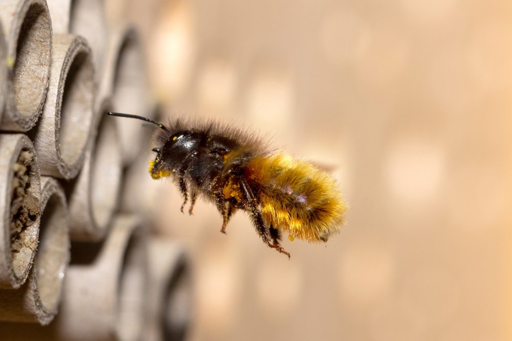 včela samotářka u hmyzího domku