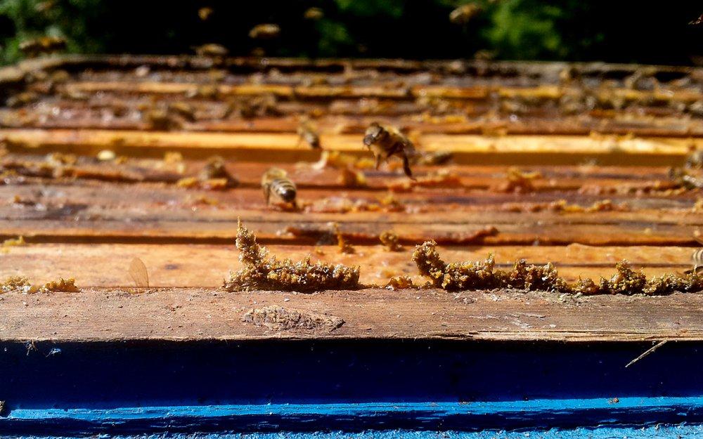 Propolis na úlu
