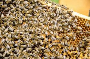 včelí buňky