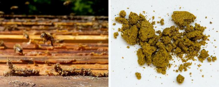 včelí produkt, propolis, pleva