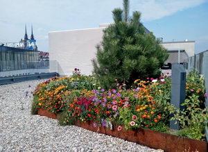 Intenzivní zelená střecha, kvetoucí střecha, greenville, pleva