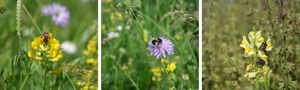 kvetoucí louky a hmyz