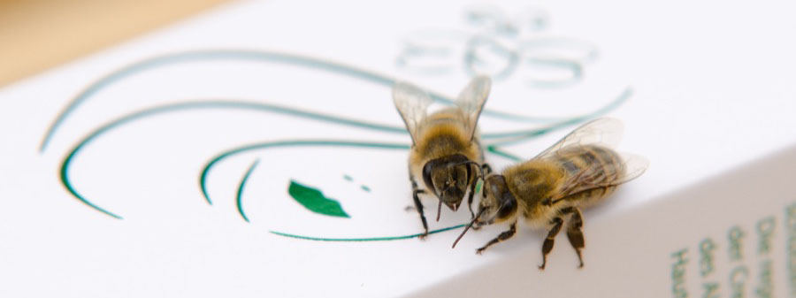 Včelky obdivují krém se včelím jedem