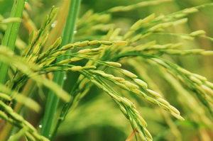 Vegetal Ceramides BGS - ochrana a obnova pokožky