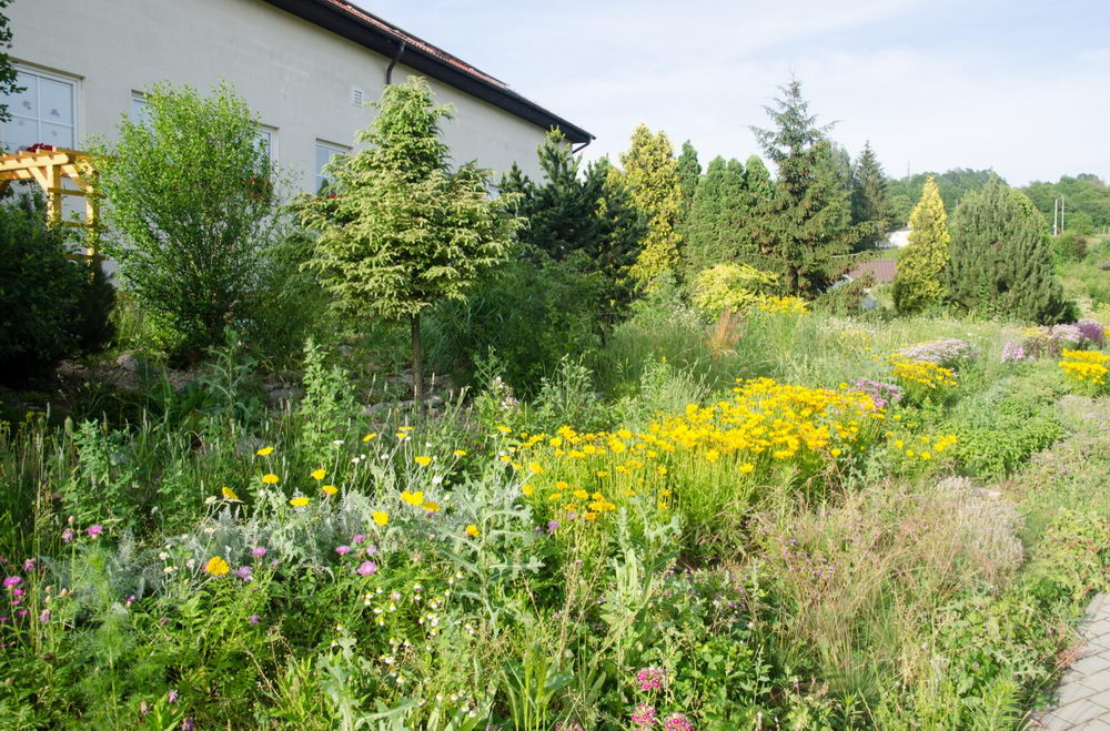 rozkvetlá přírodní zahrada