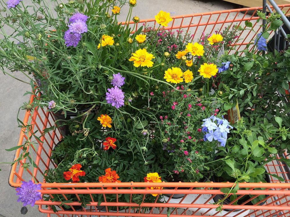 Výběr a nákup rostlin pro kvetoucí zahradu