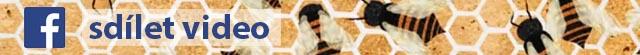 Sdílet video proč včelky staví šeštiúhelníky