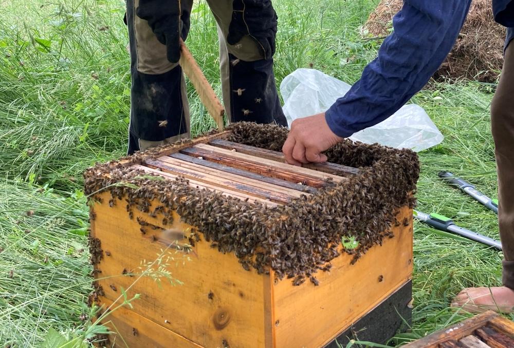 včelí roj co dělat