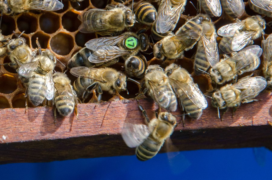 Včely v úlu