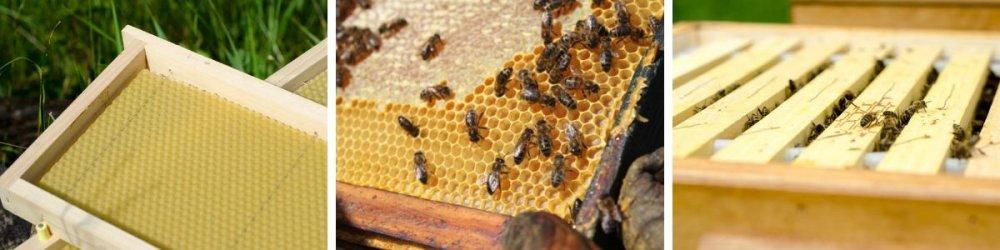 rámky v úlu
