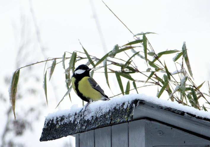 včely v zimě, ochrana úlu před ptáky