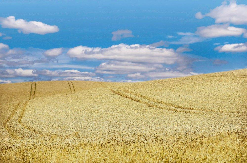 vliv zemědělství na stav hmyzu, lány pole bez mezí